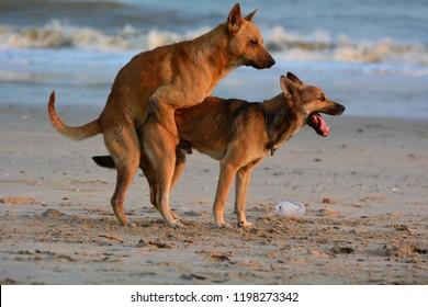 Sex wth dogs