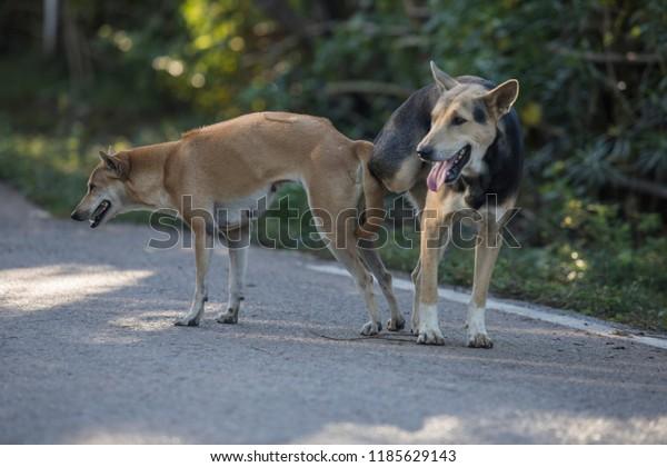 Sex dog Explore Dog