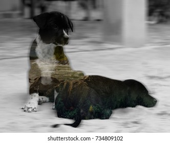 Two dogs on the sand with forest background double exposure.