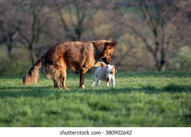 Two dogs in the park