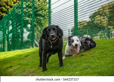Two Dogs In The Park On Summer, Dogs looking to camera, England UK