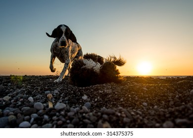 Two dogs play on early morning during sunrise