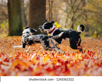 two dogs playing in autumn forrest