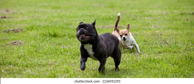 Two dogs playing with each other in a garden