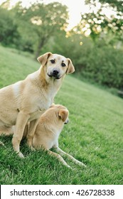 Two dogs playing on green grass garden lawn