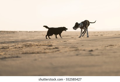 Two dogs playing on the sea shore