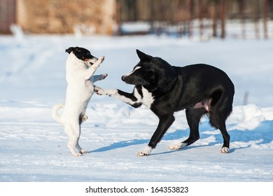 Two dogs playing in winter