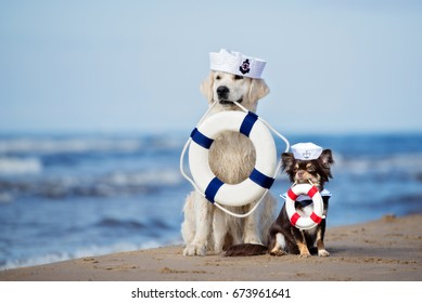 Two dogs posing with life buoys on the beach
