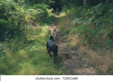 two dogs running together whilst out on a walk in the forest.
