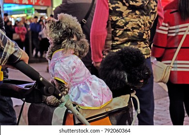 Two dogs are sitting in a baby carriage. Poodles. Wearing traditional dress. Chinese tradithional clothes.  A brown dog and a black dog.