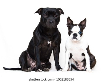 two dogs sitting beside him, on a white background