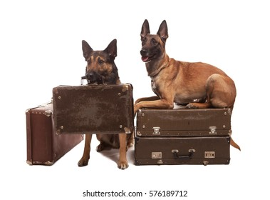 Two dogs sitting on background