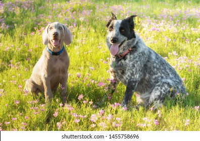 Two dogs sitting on a flowery meadow in evening sunshine