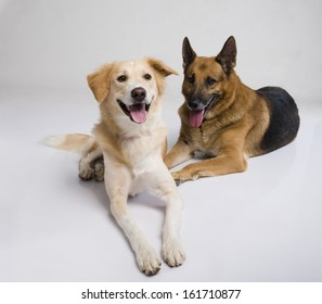 Two dogs sitting together