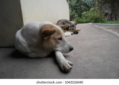 Two dogs are sleeping rest on the floor.