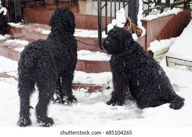 Two dogs in snow street