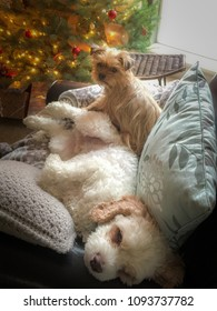 Two dogs snuggle in a chair with pillows and blanket in front of the Christmas tree