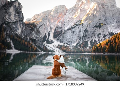 two dogs stand on a wooden pier. Mountain Lake Braies. boat station. landscape with a pet