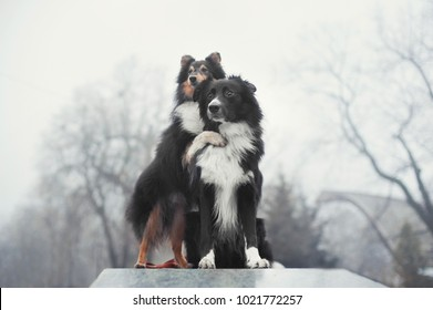 two dogs standing and hugging each other