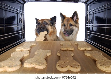 two dogs stealing dog biscuits out of the oven