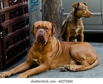 Two dogs in street