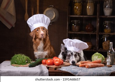 two dogs together in the kitchen are preparing food. Nova Scotia Duck Tolling Retrieverr and Border Collie. pet feeding, natural, raw food diet