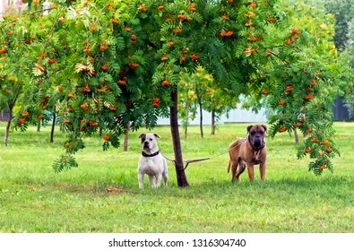 Two dogs under a tree on the grass waiting for the owner.