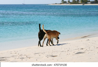 Two dogs walking side by side at the beach