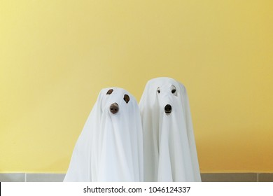Two dogs wearing a ghost costume