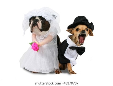 Two Dogs Wedding Attire Looking Upset Stock Photo (Royalty Free ...