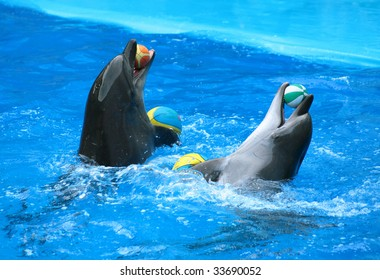 Two dolphins with balls.