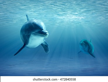 Two Dolphins bottle-nose Under Water