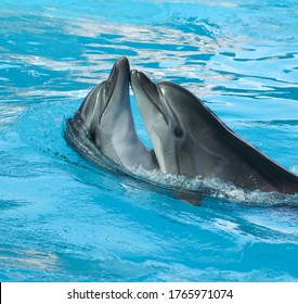 Two dolphins are dancing in the pool. Mammal marine animal.