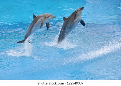 Two dolphins jump out of water.