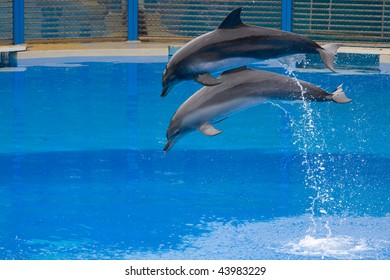 Two dolphins jump out from the water, snapped in Hong Kong Ocean Park
