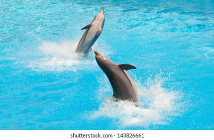 Two dolphins jumping in the pool