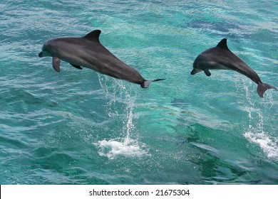 Two dolphins leaping out of the water together