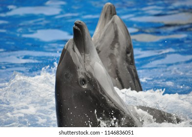 Two dolphins showing off