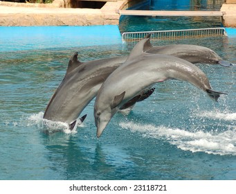 Two Dolphins synchronized