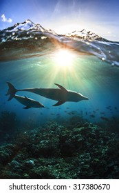 Two dolphins underwater a family mother with her child and breaking splashing wave above in sunlight