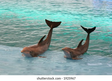 Two dolphins waving from a pool.