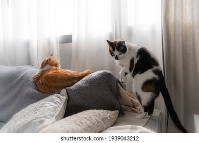 two domestic cats interact on the sofa under the window