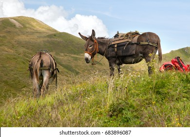 two donkey at rest in the mountains