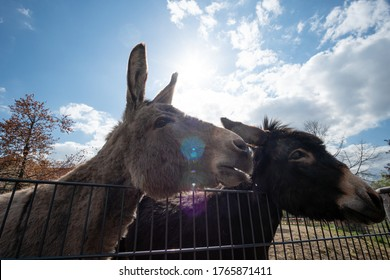 Two donkeys side by side with blue sky and sun in the background
