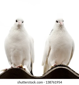 two doves on a roof isolated on a white background
