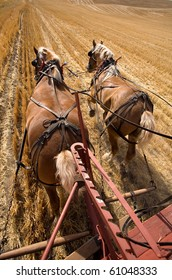 Two draft horses working at pulling the wagon in the field.