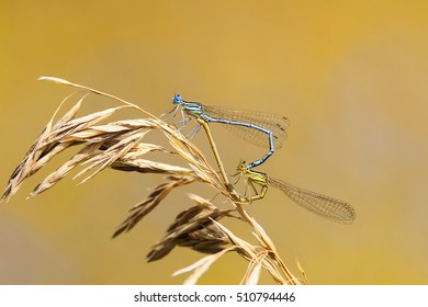 two dragonflies sit together in the shape of a heart on a bright summer meadow