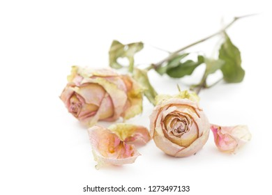 Two dried roses lying on a white surface