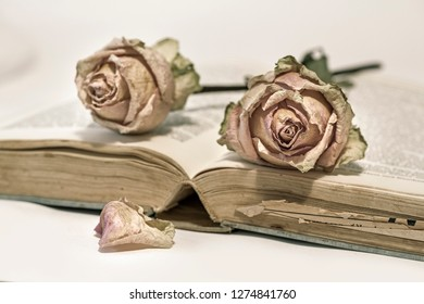 Two dried roses on an old book