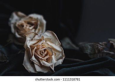 Two dried white roses on gray background with dark velvet draping creating mournful mood